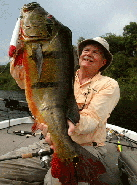 Giant Peacock Bass - Larry Larsen